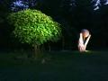 Katalpe Kunst und Garten.jpg